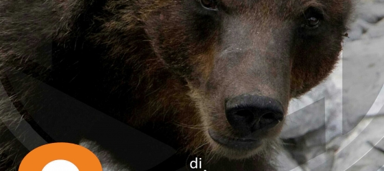 Tra orsi che dormono e gufi che cantano – 18 Febbraio 2017