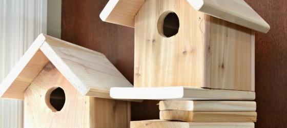 Una notte all'Ecomuseo – Le case degli uccelli